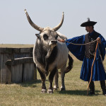 Kormos bika